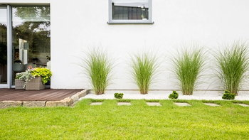 """รู้จัก """"หญ้า"""" แต่ละประเภทก่อนคิดจะทำสนามหญ้าในบ้าน"""