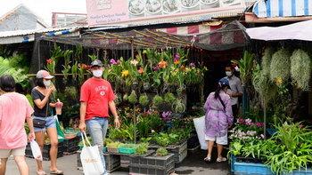 รวมตลาดต้นไม้ในกรุงเทพฯ และปริมณฑล แวะไปได้ ใกล้ๆ เดินทางสะดวก