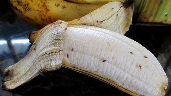 วิธีกำจัดแมลงหวี่ ก่อนเป็นพาหะนำโรคในบ้าน