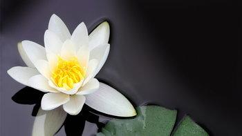 แนะนำ 5 ไม้ดอกมงคลของไทย ไม่มีในบ้านไม่ได้แล้ว