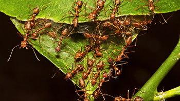 """6 วิธีกำจัด """"มด"""" ในสวน ด้วยวิธีธรรมชาติ แบบไม่เป็นอันตรายต่อคน"""