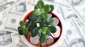 """""""ต้นคลาสซูล่า"""" ต้นไม้มงคลเพิ่มพลังบวก ดูดเงินเข้าบ้าน"""