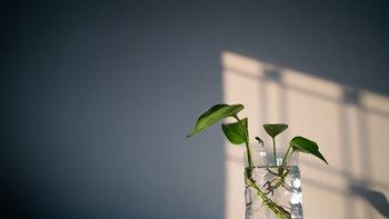 """ชวนปลูก """"3 ต้นไม้ป้องกันภูมิแพ้"""" เปลี่ยนอากาศเสียในบ้านให้กลายเป็นอากาศบริสุทธิ์"""
