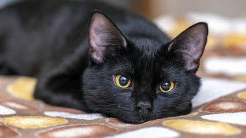 """4 เรื่องเกี่ยวกับ """"แมวดำ"""" ที่คุณอาจไม่เคยทราบ"""