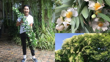 """""""บ้านไก่ วรายุฑ"""" ปลูกดอกไม้ประดับบ้านหลายพันธุ์ บ้านสะพรั่งจนนึกว่าสวนดอกไม้"""