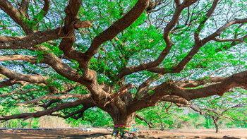 รู้จัก 4 ต้นไม้ดักฝุ่นดีเลิศ ช่วยลดปัญหาหมอกควัน ฝุ่นละออง