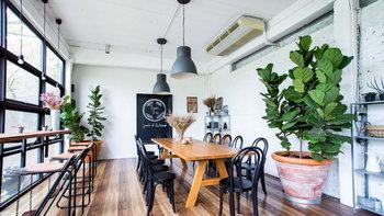 ปลูกต้นไม้ในบ้าน ดีจริงหรือเป็นภัยร้ายใกล้ตัว?