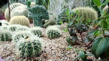 Desert Garden จัดสวนกระบองเพชรแบบเมืองร้อน