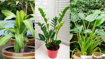 """รวม 6 ต้นไม้มงคลฉบับ """"สายมู"""" เรียกทรัพย์ เรียกโชค เพิ่มออกซิเจนให้ชีวิต"""