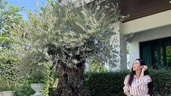 """รู้จัก """"ต้นมะกอกโอลีฟ"""" ต้นไม้แห่งอิสรภาพและความหวัง ที่อั้ม พัชราภาเลือกปลูก"""