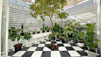 """DIY """"โรงเรือนปลูกต้นไม้"""" เรียบง่ายตามสไตล์มินิมอล สร้างด้วยงบหมื่นต้น ๆ"""