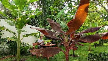 """สาวโพสต์ภาพนั่งดริปกาแฟในสวน """"กล้วยด่าง"""" แบบนี้เรียกว่าสวย และรวยมาก"""