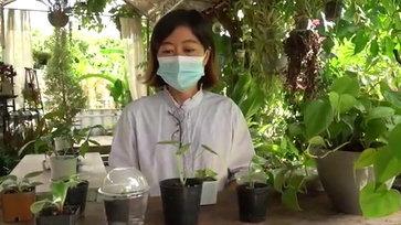 สาวอดีตนักวิจัยด้านพันธุ์พืชผันตัวเป็นเกษตรกร เพาะไม้ประดับ ไม้ด่าง ออกขาย