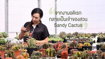 Sandy Cactus สวนกระบองเพชร ที่มีจุดเริ่มต้นมาจากงานอดิเรก