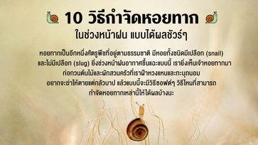 10 วิธีกำจัดหอยทากในช่วงหน้าฝน แบบได้ผลชัวร์ๆ