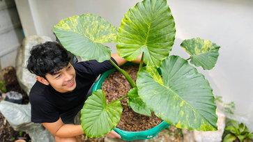 อาร์ต พศุตม์ เปิดเพจ AP STORY PLANT การันตีต้นไม้เทพทุกต้น