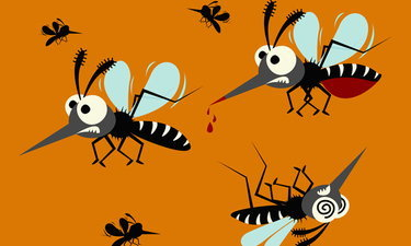 """""""7 วิธีไล่ยุง"""" ป้องกันไวรัสซิกา แบบปลอดภัย ไร้สาร ไม่ต้องเสี่ยง"""