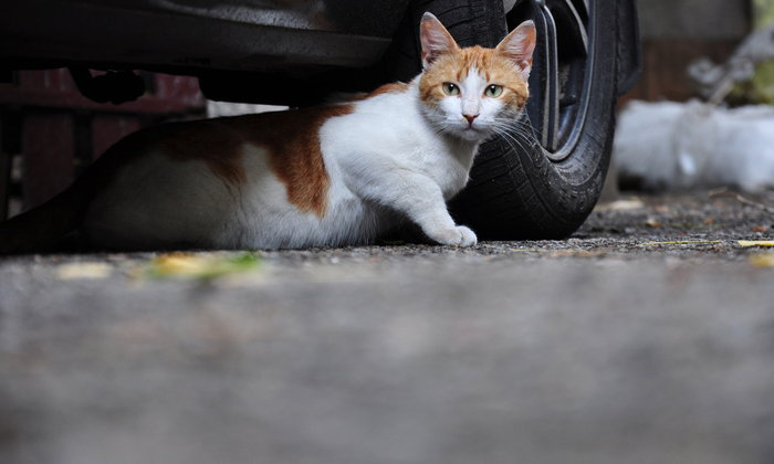 6 วิธีกำจัดแมวจร แขกน่ารำคาญที่เราไม่ได้เชิญ