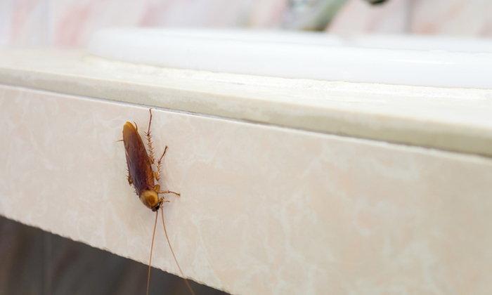 4 พื้นที่กับวิธีกำจัดแมลงกวนใจ ให้เหมาะสมกับบริเวณที่มารบกวน