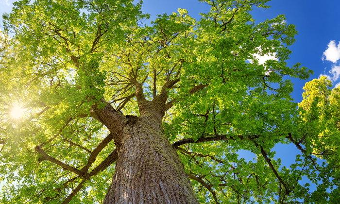 "Forest Rescue ภารกิจช่วย ""ต้นไม้"" ให้มีบ้านหลังที่สอง แบบไม่ต้องโค่นทิ้ง"