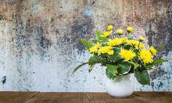 6 ดอกไม้ สื่อความหมายในทางฮวงจุ้ยแตกต่างกัน
