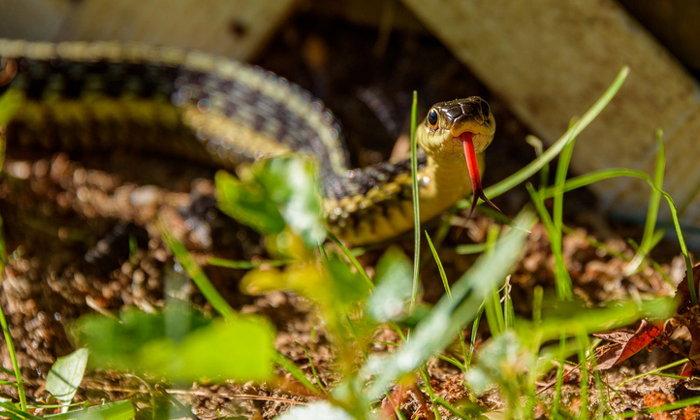 5 วิธีกำจัดงูให้ห่างไกลบ้าน และสวนของเรา