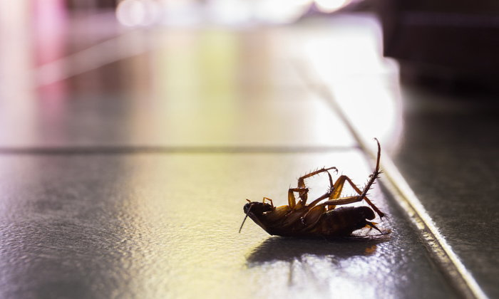 2 วิธีกำจัดแมลงสาบ หลอกให้ตายใจ แบบเชือดนิ่ม นิ่ม