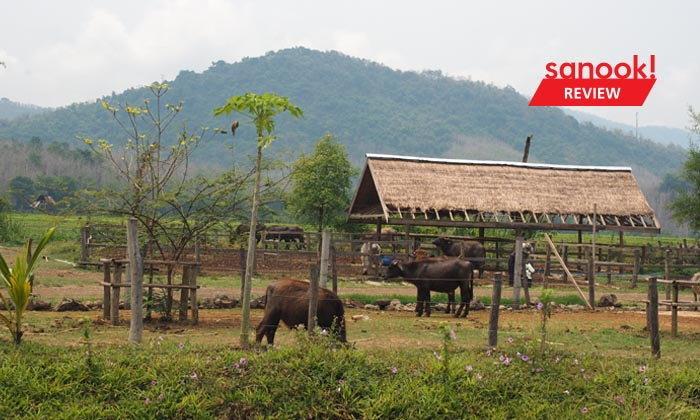 """""""ลาว บัฟฟาโล แดรี่"""" หลวงพระบาง ฟาร์มควายที่บ่มเพาะความรู้ให้เกษตรกร สู่ธุรกิจอันยั่งยืน"""
