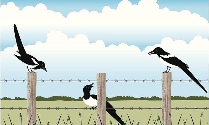 นก 7 ชนิด สัญลักษณ์ศาสตร์ฮวงจุ้ย ช่วยต่ออายุ และสร้างแรงบันดาลใจ