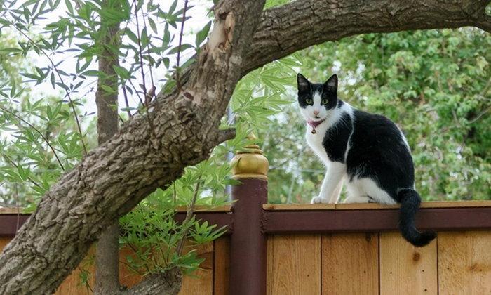 น้องแมวใครไม่รู้แอบเข้าบ้าน รับมืออย่างไรดี
