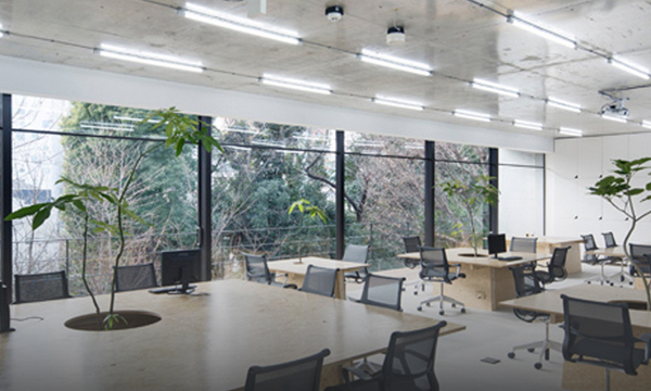 Japan : Plants in Tokyo office space