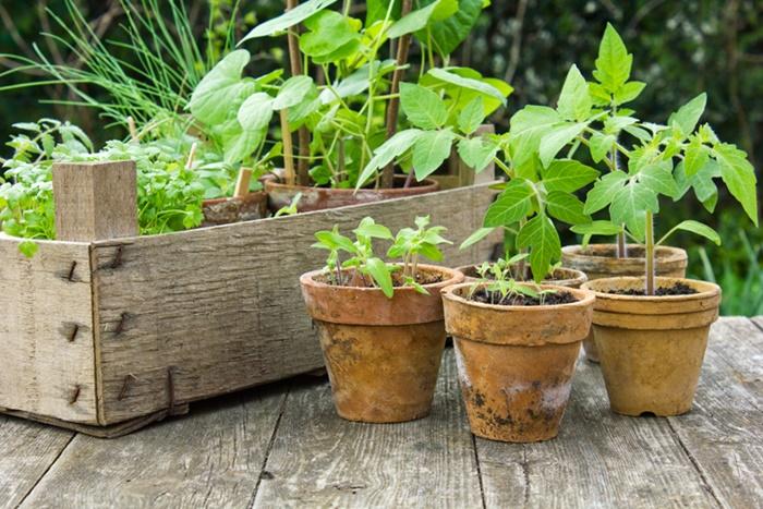 อยากปลูกผักกินเองแต่ไม่มีพื้นที่ใช่ไหม ลองดูวิธีปลูกพืชผักสวนครัวของคนเมืองแบบไม่ต้องง้อพื้นที่ดังต่อไปนี้  รับรองว่าต้องถูกใจคนชอบกินผักแน่ ๆ