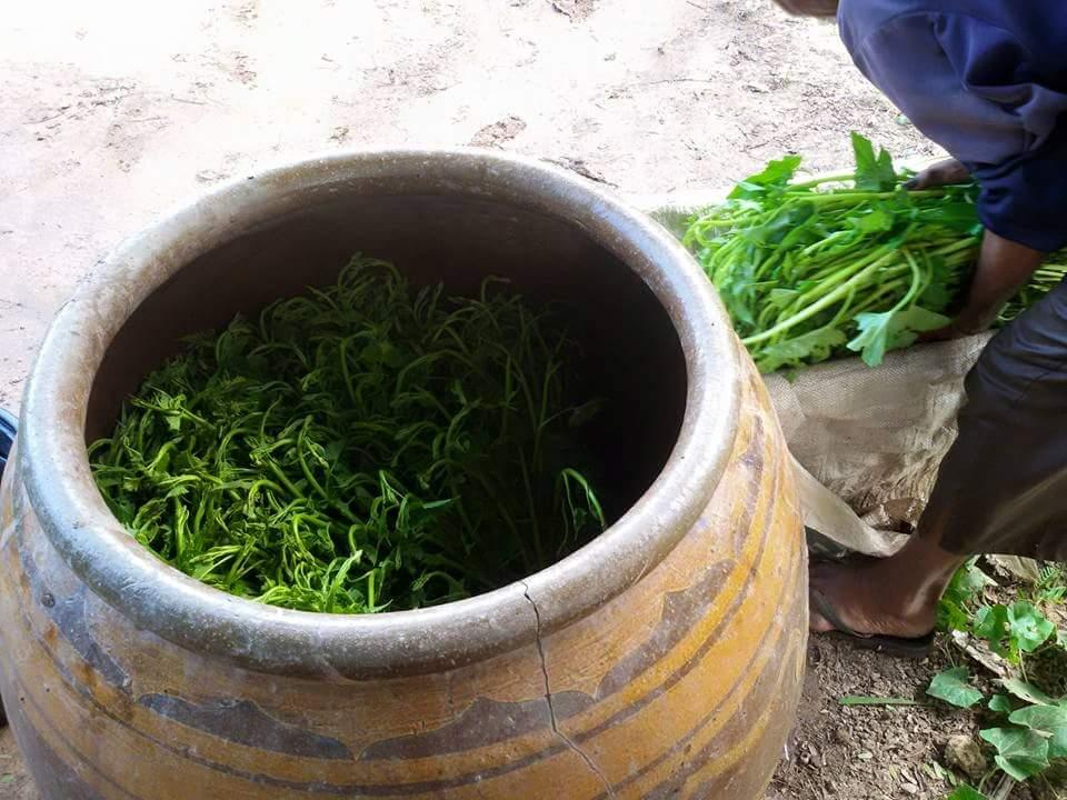 ปลูกผักบุ้งในโอ่ง