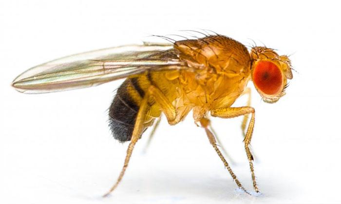 """ไล่ """"แมลงหวี่"""" จอมกวนใจ รำคาญตา ที่มากับหน้าร้อน แบบไร้สารเคมี"""