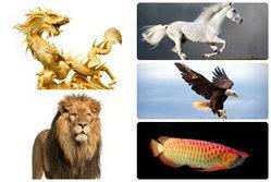 5 สัตว์มงคลตามหลักฮวงจุ้ย