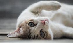 ฝันเห็นแมว