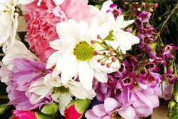ดอกไม้แห่งโชคชะตาทั้ง 12 ราศี