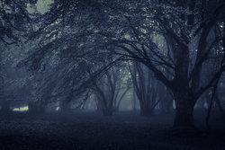 5 ต้นไม้ไล่สิ่งอัปมงคล ป้องกันผี สิ่งชั่วร้าย
