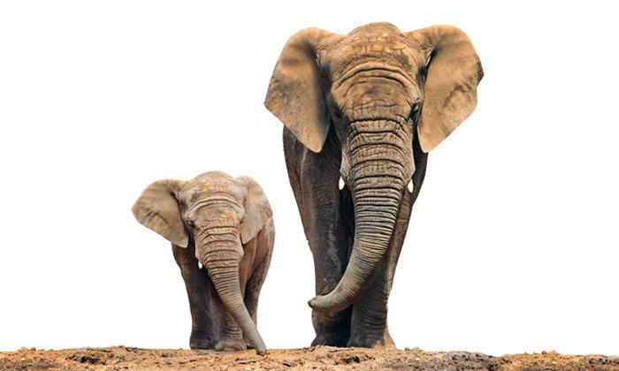 ทำนายฝัน ฝันเห็น ช้าง ฝันว่า ช้าง