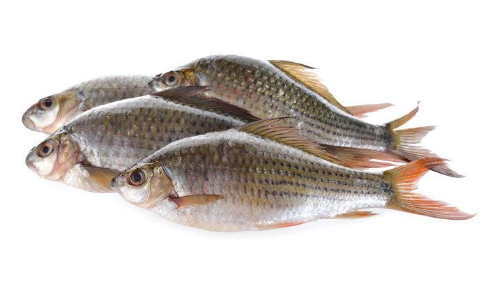 ทำนายฝัน ฝันเห็น ปลา ฝันว่า ปลา