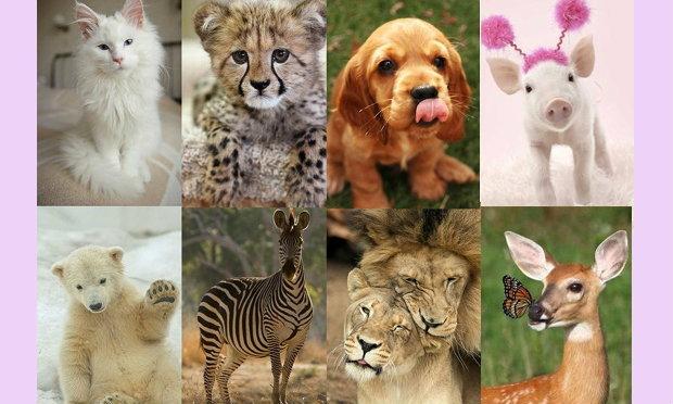 ค้นหาตัวตนที่แท้จริงจากสัตว์ 12 ชนิด