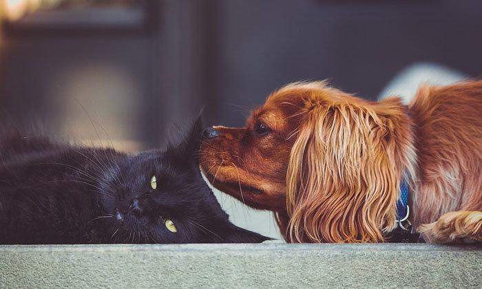 หมา-แมวสะท้อนนิสัยเจ้าของ