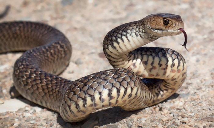 ทำนายฝัน ฝันเห็น งู ฝันว่า งู