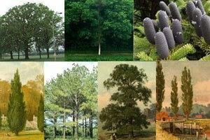 ต้นไม้ประจำวันเกิดบอกนิสัย