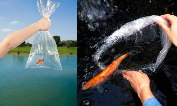 ปล่อยสัตว์ปล่อยปลานั้นได้บุญจริงหรือ?