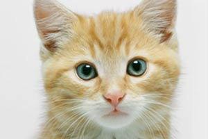 ความเชื่อเรื่องการแห่นางแมว