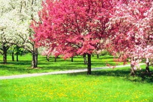 ต้นไม้มงคลประจำปีเกิด