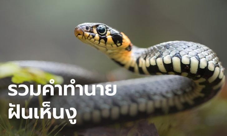 ทำนายฝัน ฝันเห็นงู ฝันว่ากินงูเป็นๆ หมายความว่ายังไง พร้อมเลขให้โชค