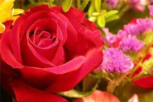 ความหมายของดอกไม้ ที่นำมาใช้ไหว้สิ่งศักดิ์สิทธิ์