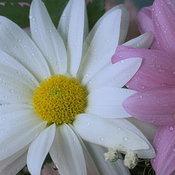 ต้นไม้และดอกไม้กับพลังหยาง